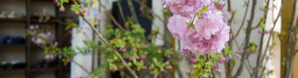 和小物さくら春夏新作発表会 春の作楽展Vol.19